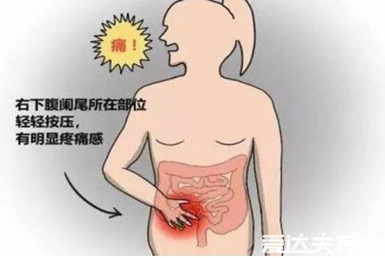 位置 盲腸 結腸